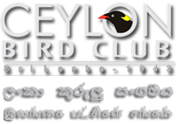 Ceylon Bird Club